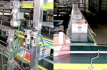 instalaciones de empaquetados de plátanos en Coplacsil